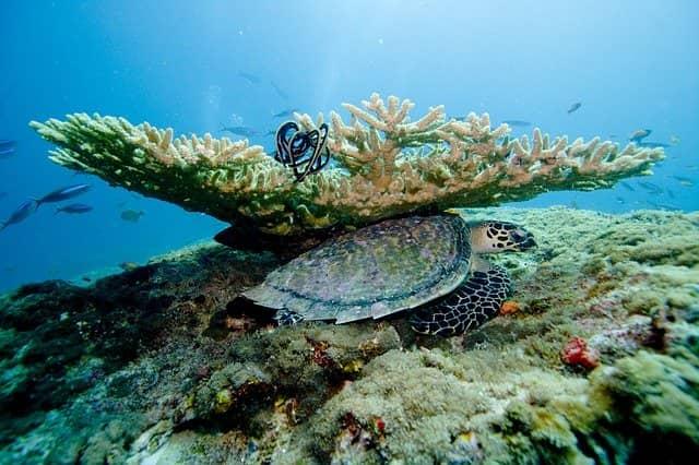Кораллы Мальдивы