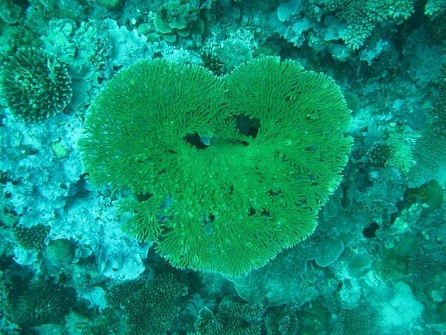 Сердце Мальдивы